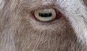 Ochii spun totul despre un animal!