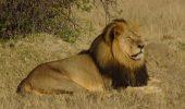 Puii leului Cecil sunt bine