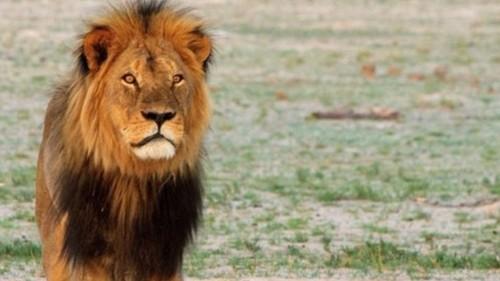 Peste 500.000 de lire sterline au fost donate dupa moartea leului Cecil