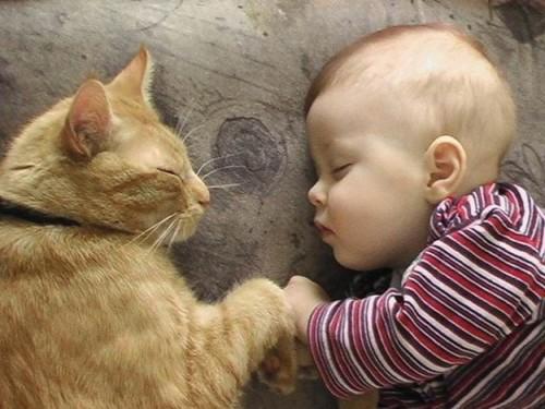 Care sunt cele mai potrivite rase de pisici pentru copii?