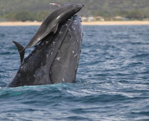 Legatura dintre delfini si balene