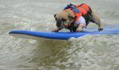 Campionat de surfing pentru caini in California – la a 10-a editie