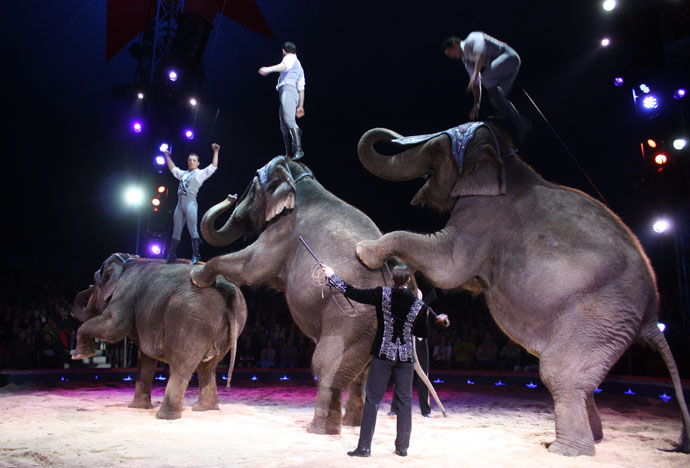 elefanti circ knie1