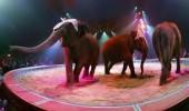 elefanti circ knie2