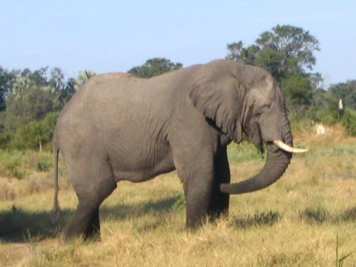 Inteligența elefanților nu este doar un mit. Noi avem dovada! Clipul ăsta îți va însenina ziua