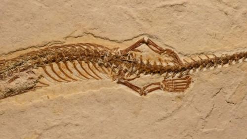 Fosila de sarpe cu patru picioare, descoperita in Brazilia