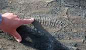 Cele mai vechi organisme vii erau inventive in ceea ce priveste reproducerea
