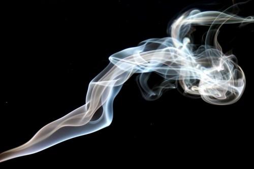 Fumatul dauneaza grav sanatatii animalelor