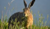 Analiza: Criza de iepuri!