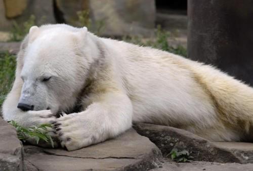 Knut a suferit o forma de encefalita diagnosticata pana acum numai la om