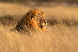 leul african