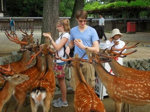 Nara, orasul plin de caprioare