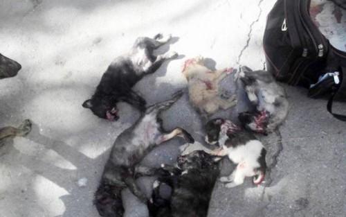 Apel pentru oprirea masacrarii cainilor din Chisinau!