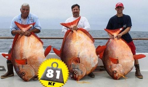 pescarii