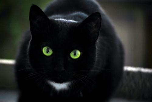 Care sunt trasaturile unor animale-vampir? Toți iubitorii de FELINE trebuie să știe asta
