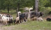 S-a convenit: pana la 13 caini, la 1000 de oi