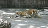 Gradina Zoologica Galati va fi redeschisa pentru public!