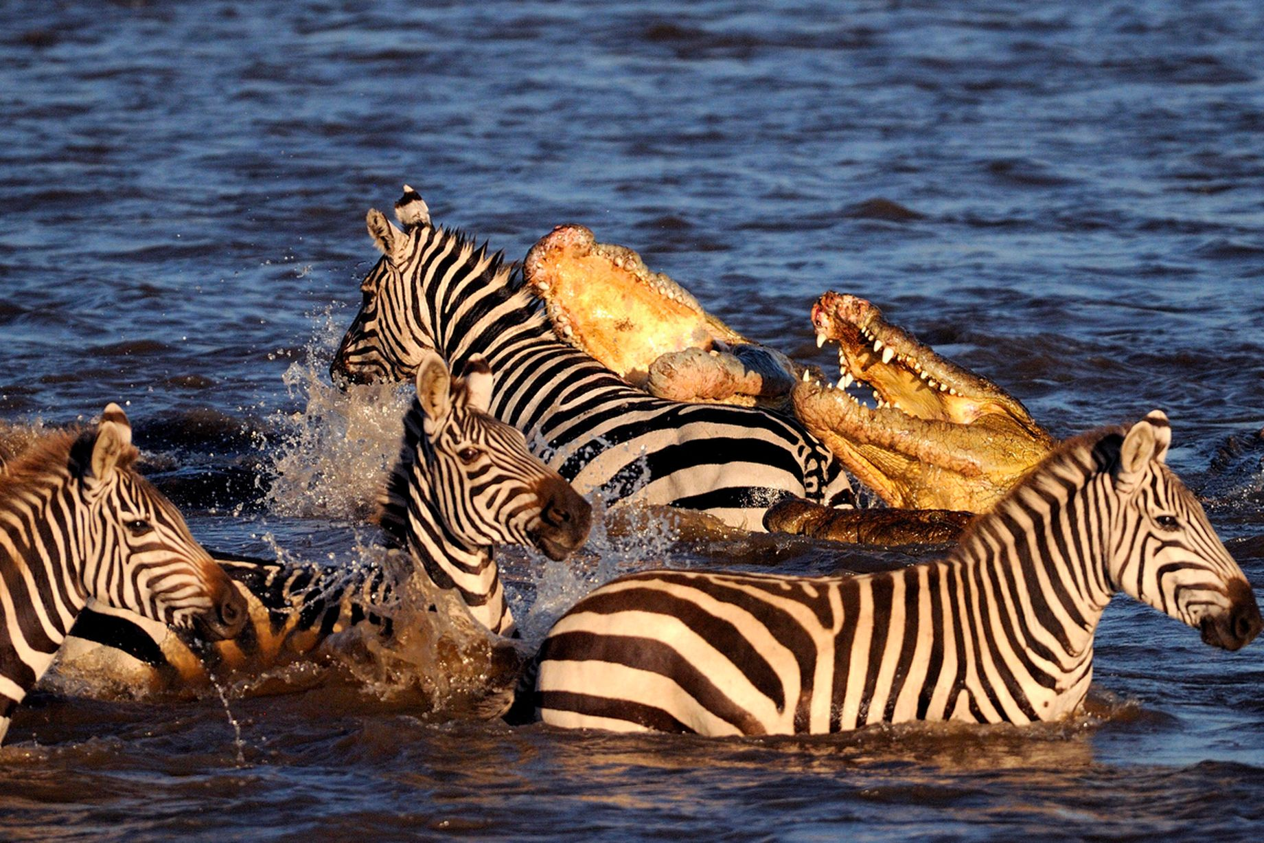 6crocodile-Maasai-Mara-Kenya-on-August-23-2015