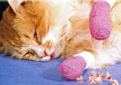 Cat costa taiatul unghiilor la pisici
