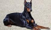 sursa foto: www.dogmagng.com