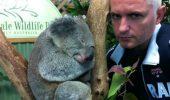 """Iantu in rolul lui """"Blinky Bill: Koala cel poznas"""""""