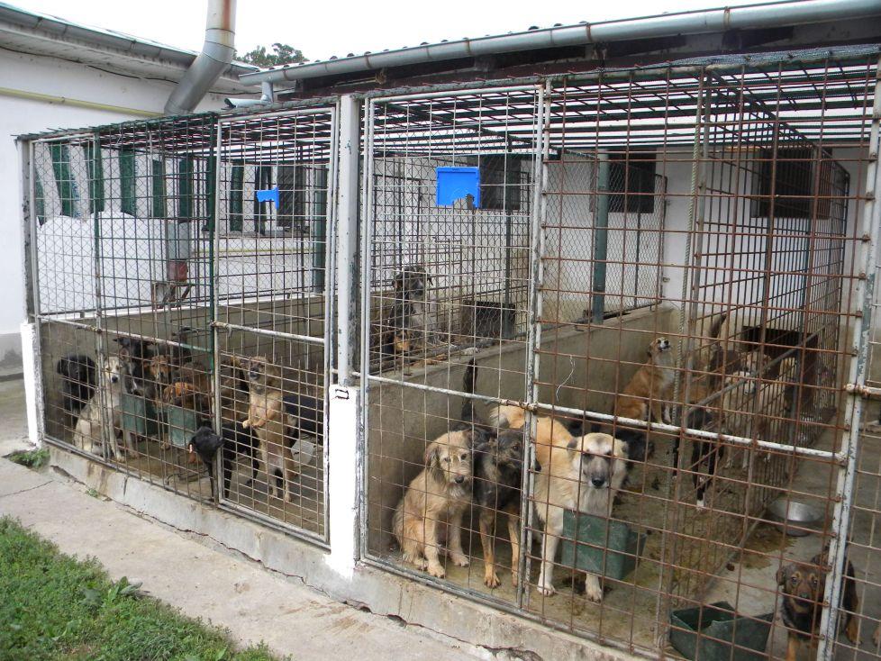 Decizie radicală la Constanța. Viceprimarul a mobilizat mai multe echipe în sprijinul animalelor fără stăpân