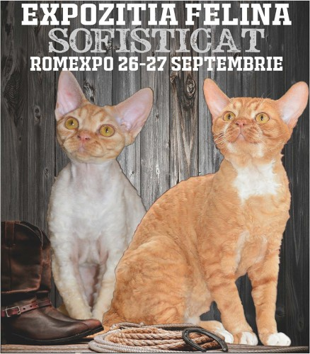 Nu uitati! SofistiCAT, in week-end