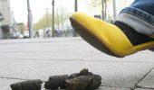 Aradenii vor fi amendati daca nu spala cu apa urmele dejectiilor animalelor de companie