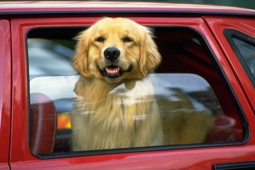 În vacanță cu câinele? Ce trebuie să știi