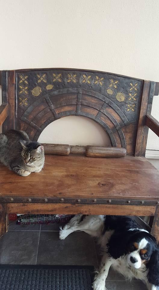 cainele si pisica1