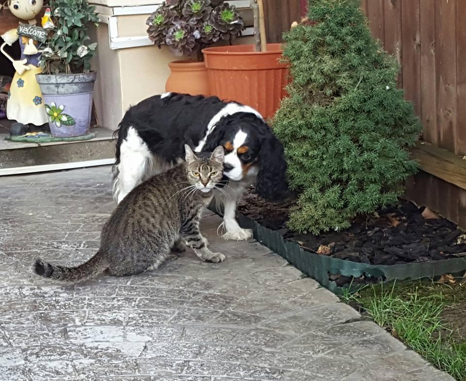 cainele si pisica2