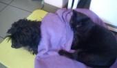 cat nurse 2