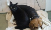cat nurse3