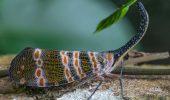 Totul despre Cicada cu felinar