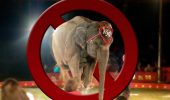 Mai sunt doar câteva ore! Putem salva soarta animalelor sălbatice din circuri!