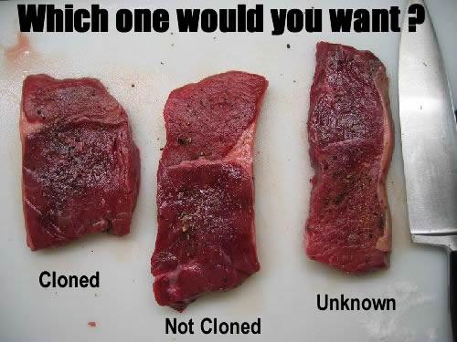 Europenii nu vor alimente provenite din animale clonate