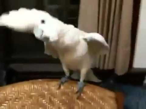 dansatorul