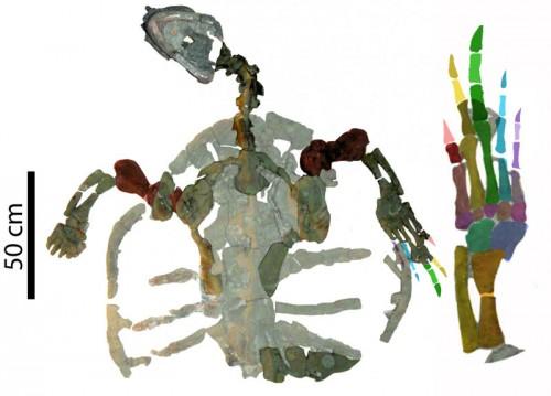 Cea mai veche fosila a unei broaste testoase marine