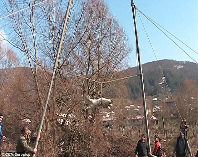 dog bulgaria1