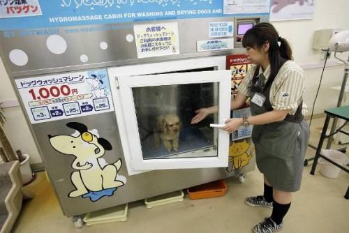 Masina de spalat…animale!