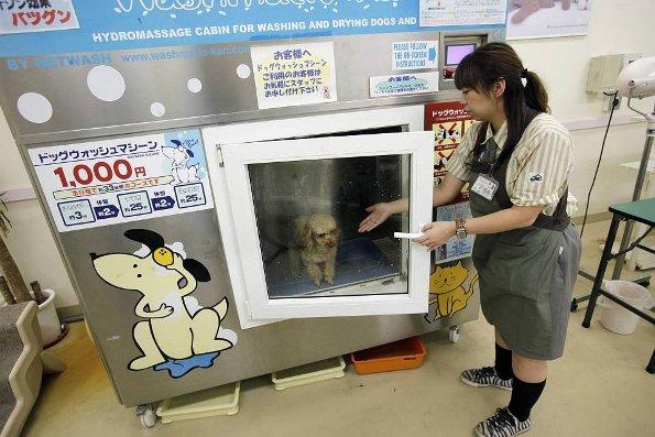 dog-washing-machine
