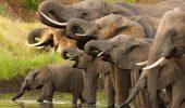 Misterul este aproape dezlegat…Pot elefantii sa pacaleasca cancerul?