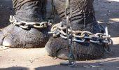 elephant-chain