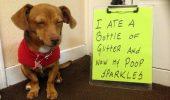 Cea mai AMUZANTĂ metoda de EDUCARE a câinilor la care NU te-ai fi gândit