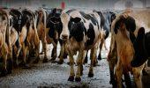 Lucruri pe care cei din industria lactatelor nu vor ca tu sa le stii