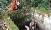 O emotionanta poveste despre prietenie canina