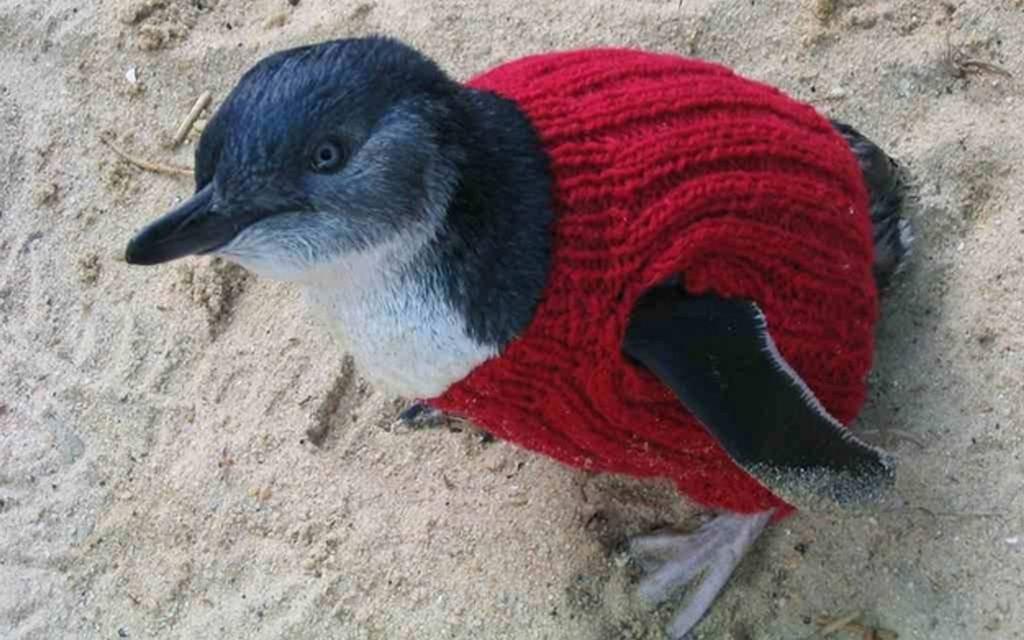 foto pinguin2
