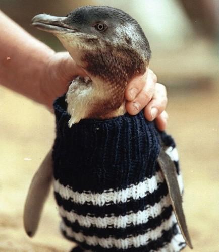 foto pinguin3