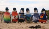 Pulovere pentru pinguinii pitici afectati de deversarile de petrol