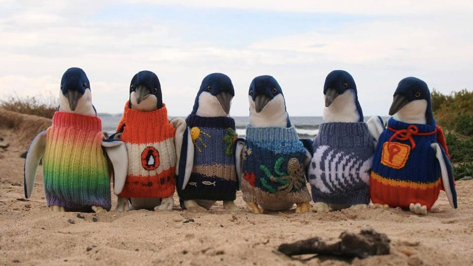 foto pinguini1